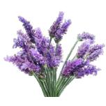 Lavendel (laialehine) eeterlik õli 10ml
