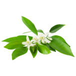 Neroli eeterlik õli 5ml